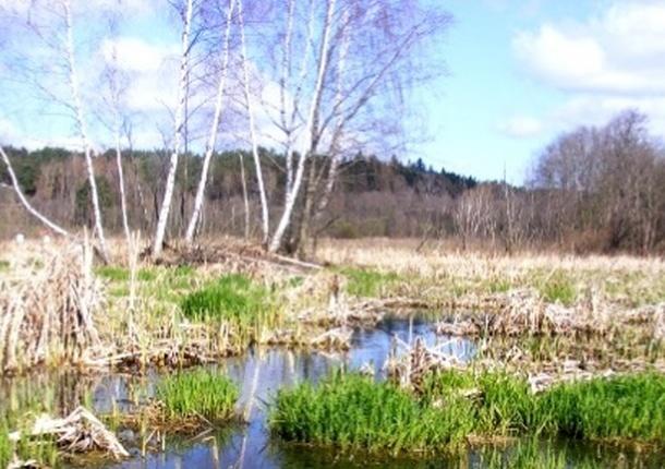 Минэкологии: болото в Красногорском районе взято под охрану